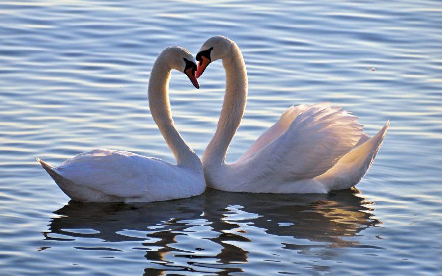 Картинки про любовь со смыслом