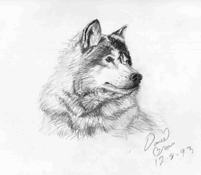 Картинки для срисовки карандашом прикольные