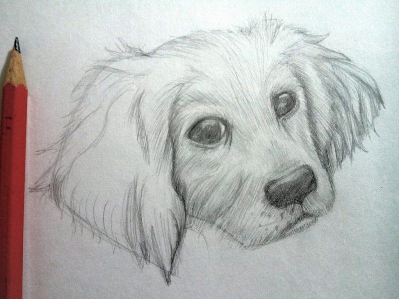 Картинки собак для срисовки