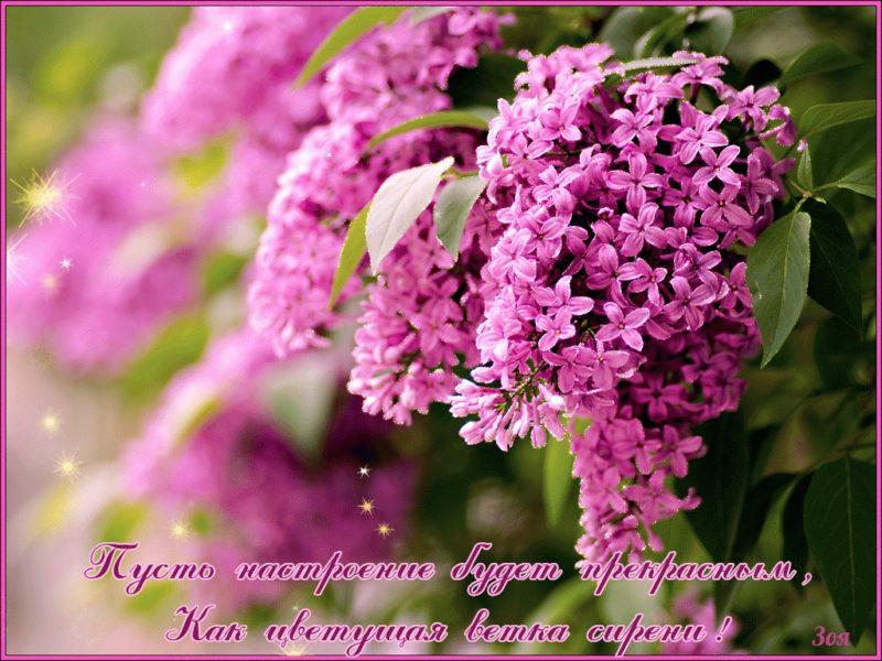 Хорошего дня и отличного настроения картинки с пожеланиями
