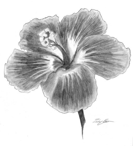 Рисунки цветов карандашом для срисовки