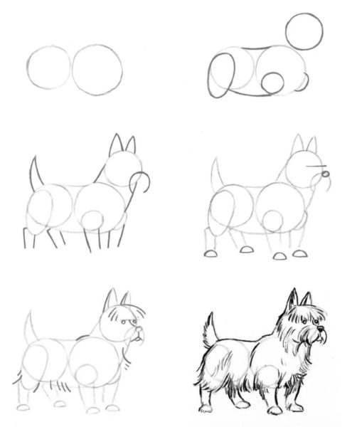 215 картинок для срисовки карандашом